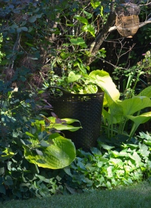 Laundry basket used as a plant container