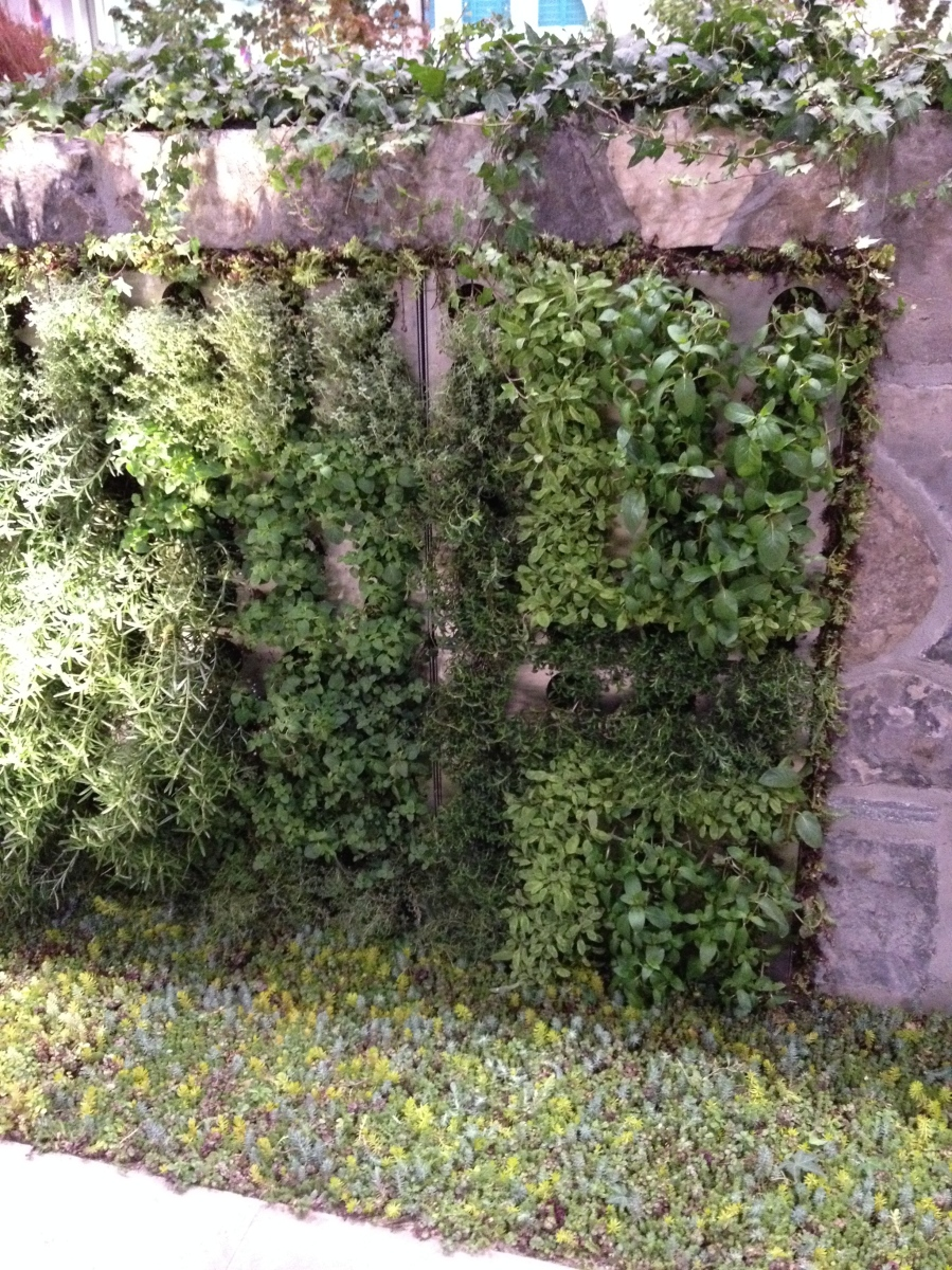 Living wall with herbs.