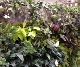 Close-up of living wall by Hollander Landscaping Ltd.