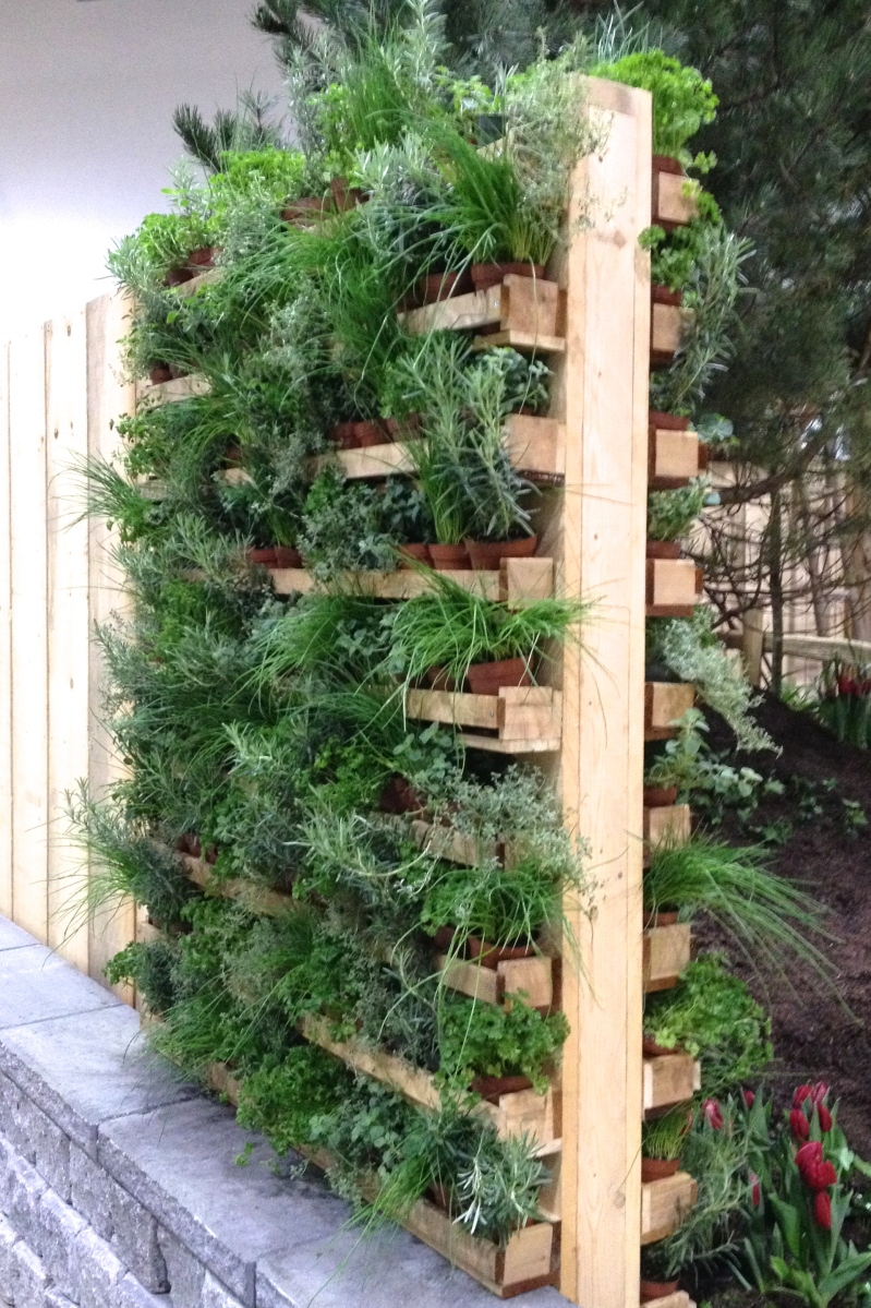 Living wall featuring herbs.
