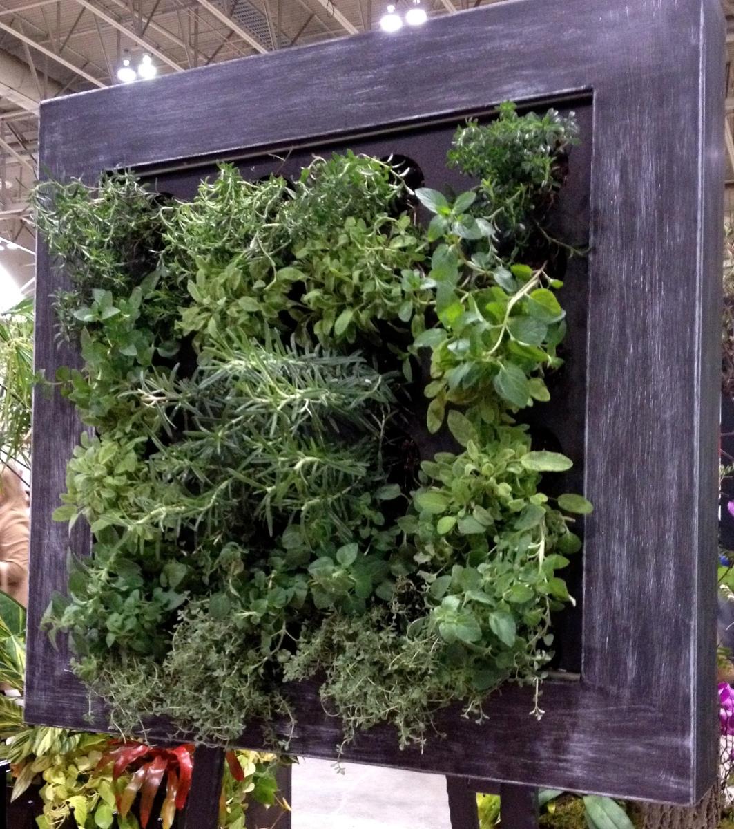 Herbs grown vertically in frame.