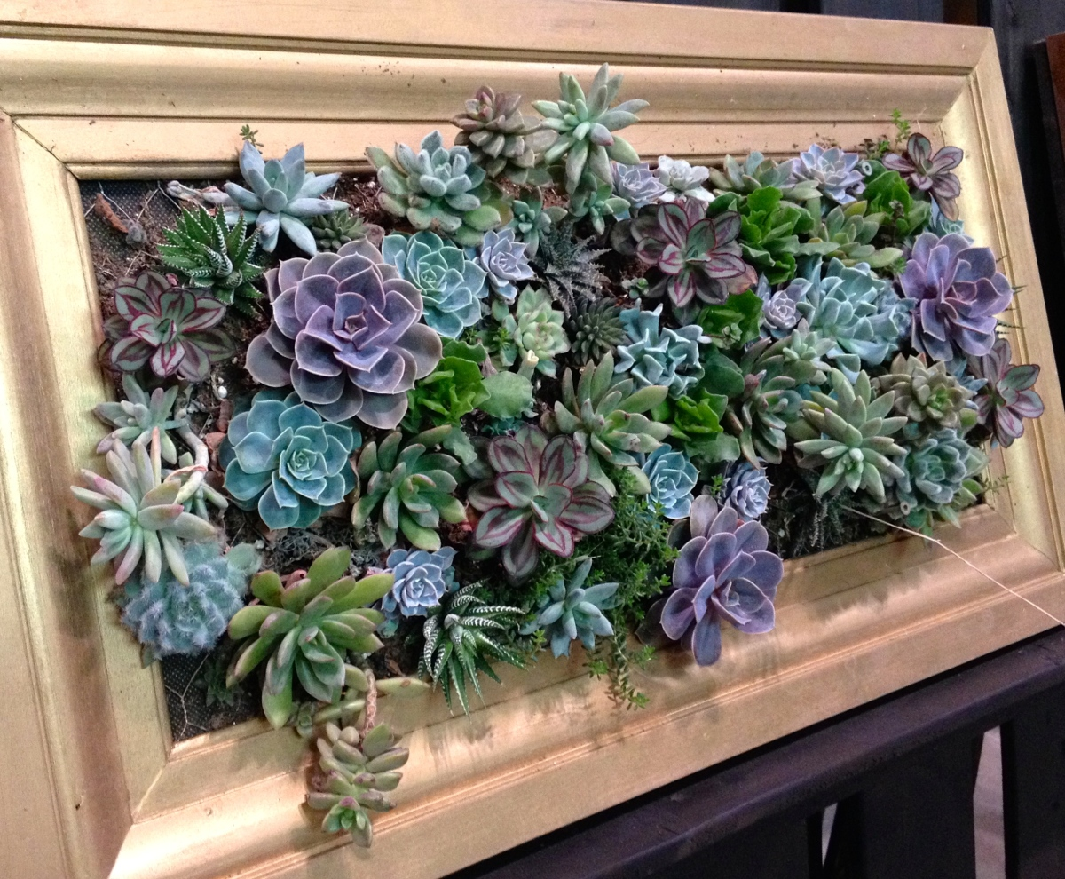 Sedums in a gold frame.