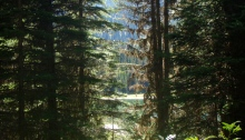 View of the forest near Island Lake Lodge, Fernie, B.C.