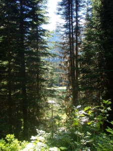 View of the forest near Island Lake Lodge, Fernie, B.C.