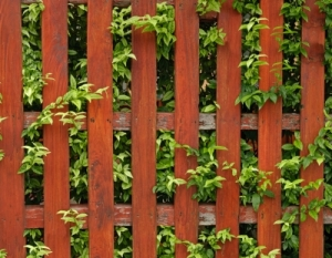 Gardening success: look over the fence