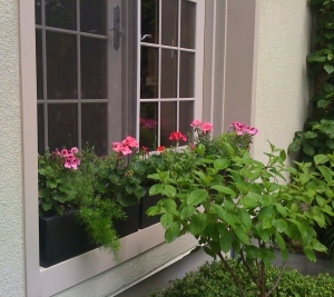 Plants in containers at window