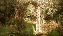 Garden view through a window