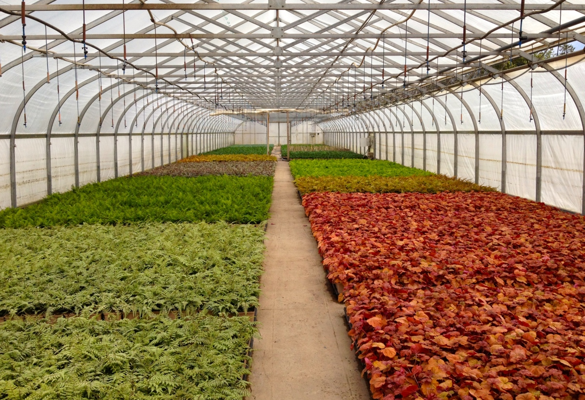 Long view of garden nursery with plants in containers