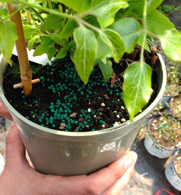 Potted plant showing fertilizer