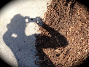 Mulch and shadow