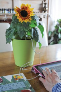 Electricity-generating sunflower