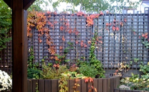 Trellis with top edging.