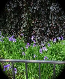 Tree with irises