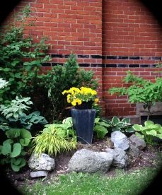 Another home on a corner lot plays up the gorgeous red brick on the side of the house with a simple arrangement of shrubs, hosts, an ornamental grass and one strategically place container planted with a loud pop of yellow blooms.