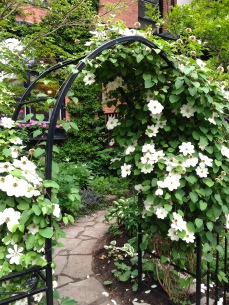 Clematis and curving front path
