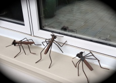 Ant sculptures