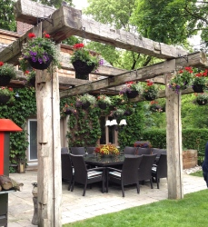 Hanging baskets on arbor