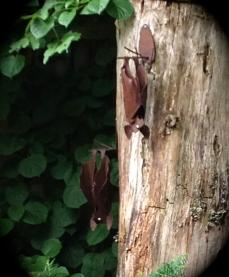 Bat sculptures