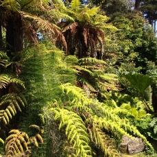 SFBG ancient plants