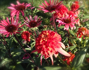 Two types of Echinacea