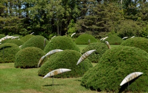 Salmon sculptures and pine bushes