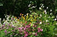 Blooms in garden