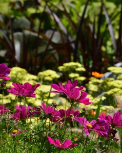 Flower planting ideas