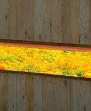 Wall of Secret Orange