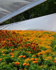 Panels and orange flowers
