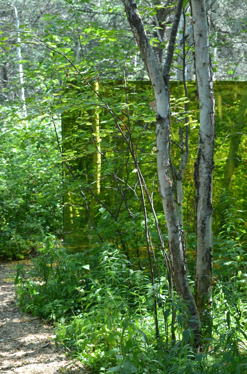 Glass panels in woodland