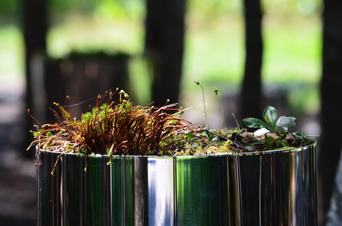 Forest plants in container