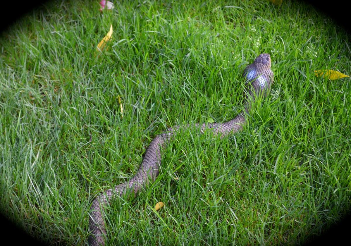 Fake cobra in grass