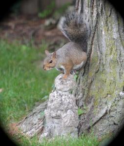 Squirrel on sculpture