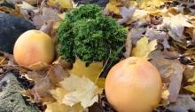 Dwarf shrub Butter Ball