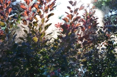 Sunlight in shrubbery