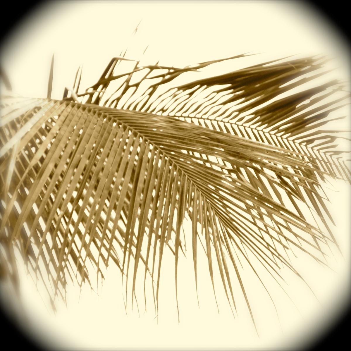 Palm in sepia