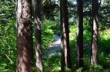 Record Garden pathway