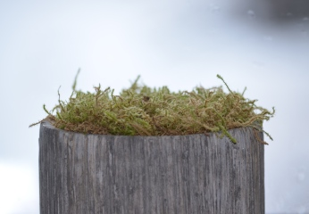 Moss in container