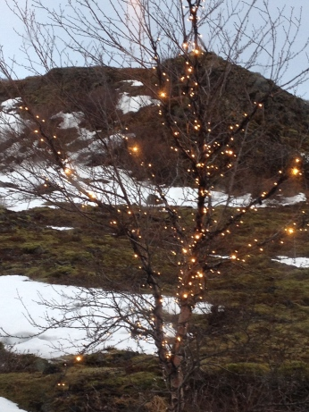 Fairy lights and mossy landscape