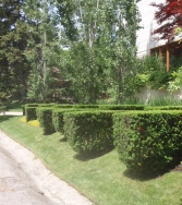 Parallel hedges