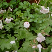Bee positive: Making a change in the garden and at the store