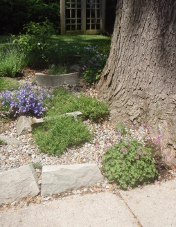 Rock garden and sidewalk