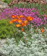 Contrasting colours and textures rule in this garden making flowers all the more eye-catching.