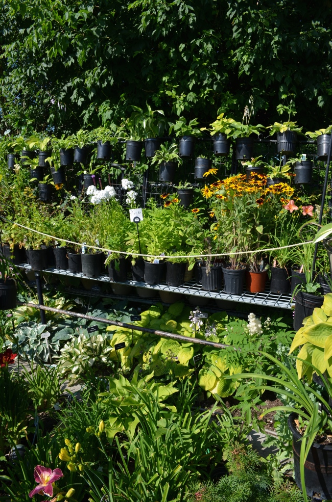 Pots of fence and shelves