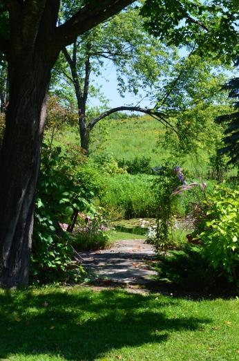 Branch framing view