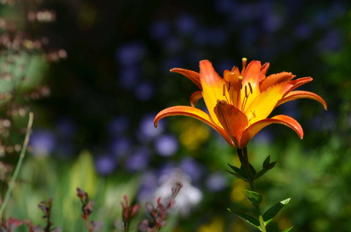 Bright lily
