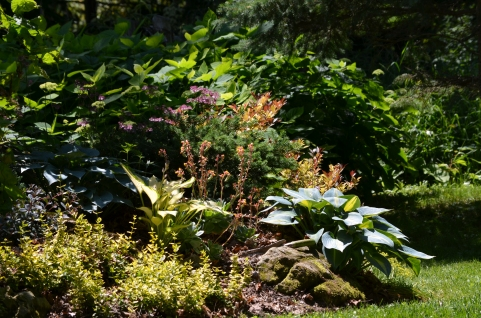 Flower bed in shade