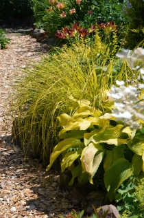 Green and gold flowerbed