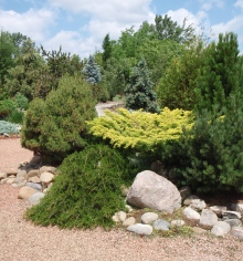 Variety of shrubs