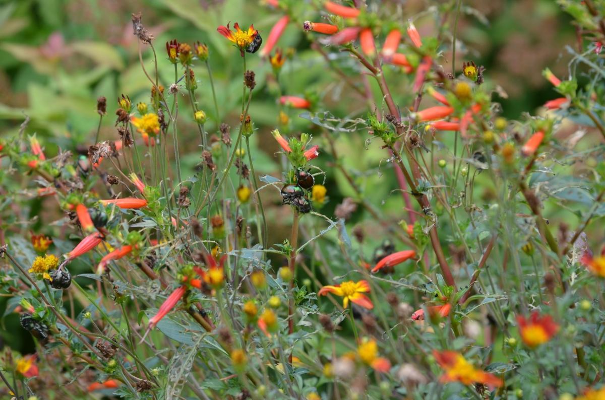 Beetles in plants